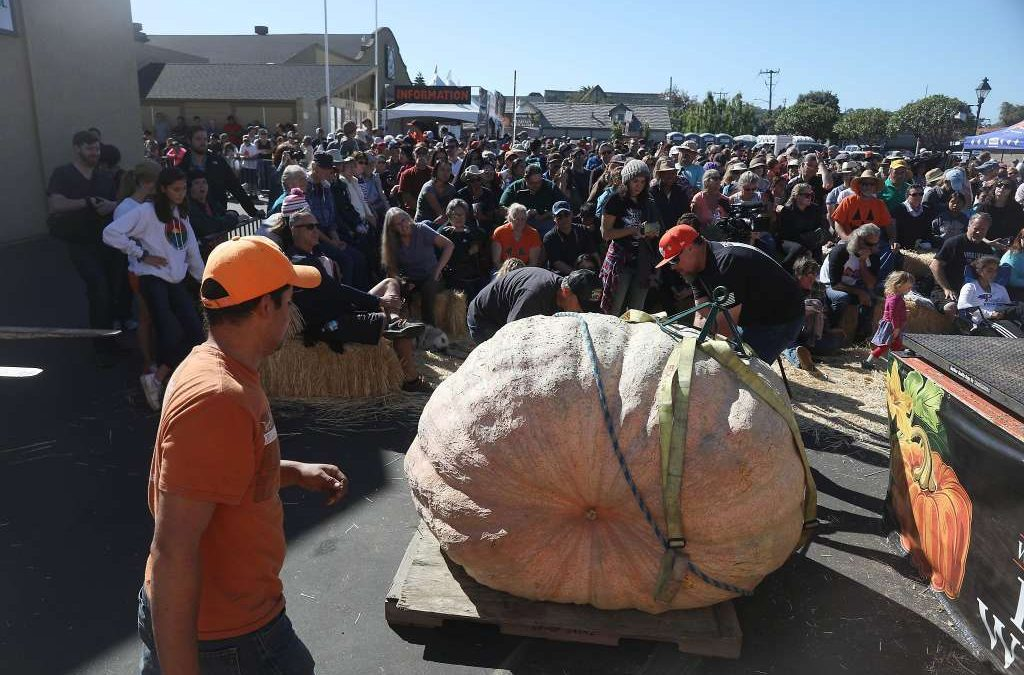 Ruben Frias Won 3rd Place in Half Moon Bay Giant Pumpkin Contest